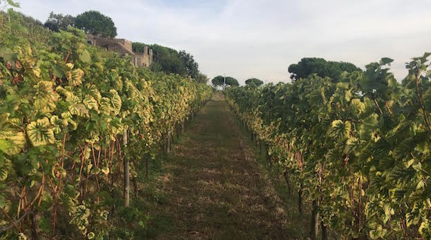 The Wines Of Campania Getting Better And Better Nov 2016