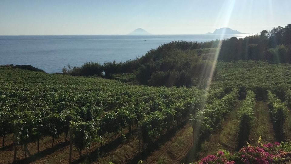Sicily Continues To Progress (Sep 2017) | Vinous - Explore All Things Wine