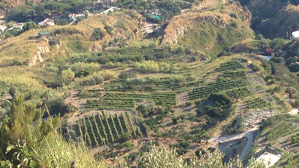 Campania More Than Just Fiano Greco And Aglianico Nov